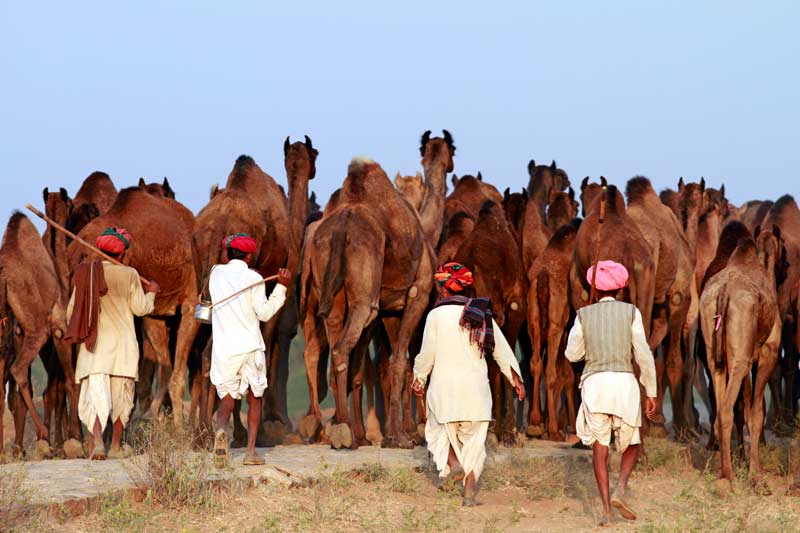 Pushkar-Fair-1